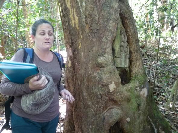 Our gudie taking us through the Littoral Rainforest